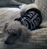 SkeletonDog Holly